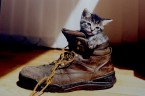 Grumo - The Fluffy Kitty inside a Boot